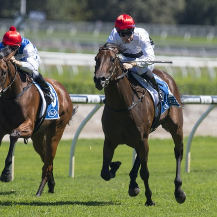 Frolic-BerryTommy-02132017-7455 - FROLIC (Husson - Leveller) wins the Inglis Classic (Restricted Listed) on Apollo Stakes Day.  Trained by Michael Freedman....