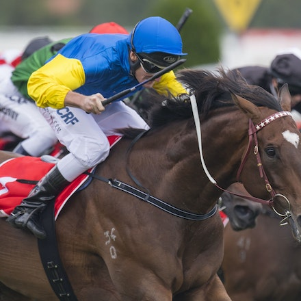 20170211:  CF Orr Stakes Day - 11 February 2017 held at Caulfield Racecourse.  It featured the running of the G1 CF Orr Stakes, won by BLACK HEART BART,...
