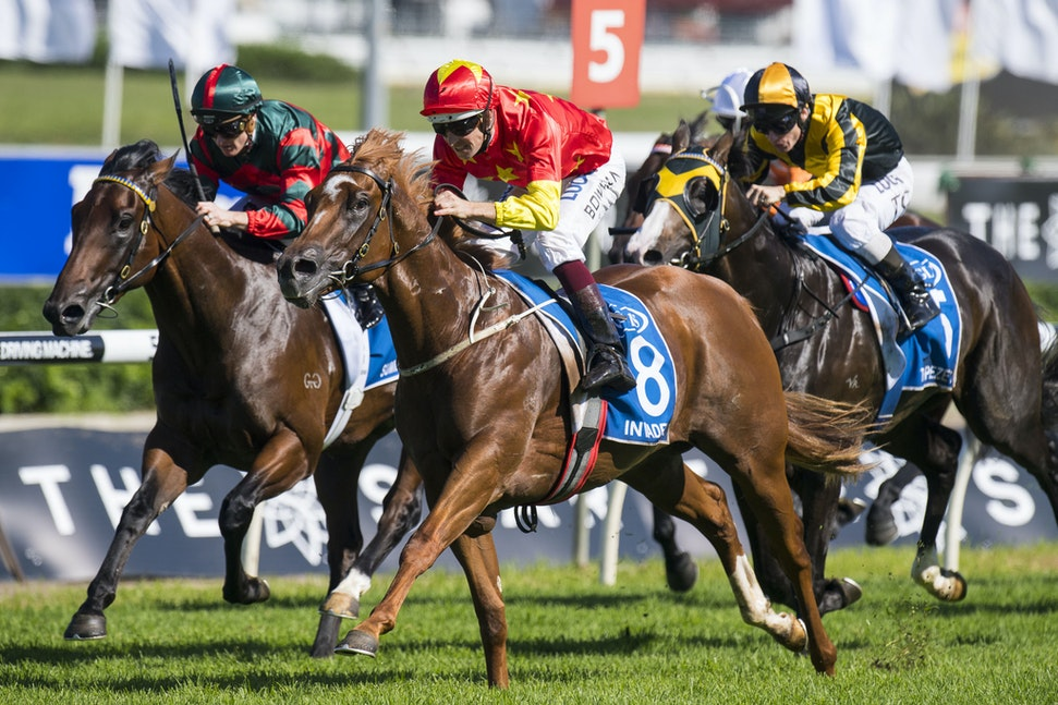 Invader-BowmanHugh-04012017-7159 - INVADER (Snitzel - Magic of Sydney) wins the G1 AJC Sires Produce Stakes.  Summer Passage was 2nd and Trapeze Artist...