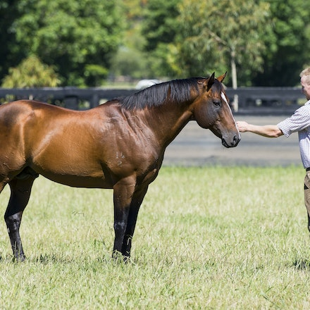 Snitzel-11162016-2293 - at Arrowfield Stud.  Wednesday 16 November 2016. Photo - Bronwen Healy.  The Image is Everything - Bronwen Healy and Darren Tindale...