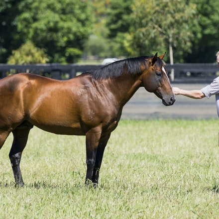 Snitzel-11162016-2294 - at Arrowfield Stud.  Wednesday 16 November 2016. Photo - Bronwen Healy.  The Image is Everything - Bronwen Healy and Darren Tindale...