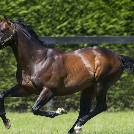 Oasis Dream - Juddmonte Farm - Oasis Dream, winner of the Group 1 July Cup and champion stallion, photographed at Juddmonte Farm.