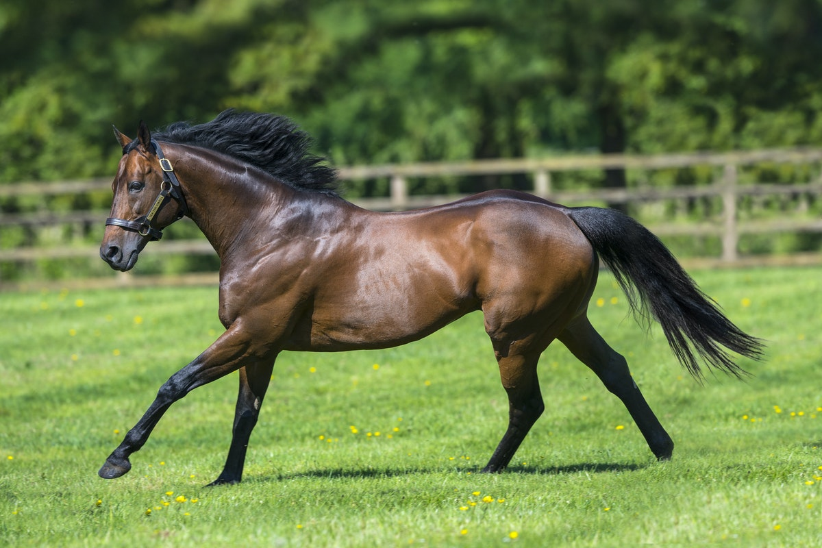 SeaTheStars-05252017-3910-edit - SEA THE STARS (Cape Cross - Urban Sea) photographed at Gilltown Stud.  Photo by Bronwen Healy - The Image is Everything....