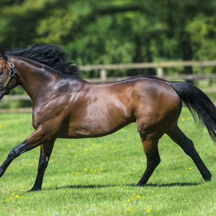 Sea The Stars - Gilltown Stud - SEA THE STARS (Cape Cross - Urban Sea) was a champion racehorse and 6 time Group1 winner, which included victories in prestigious...