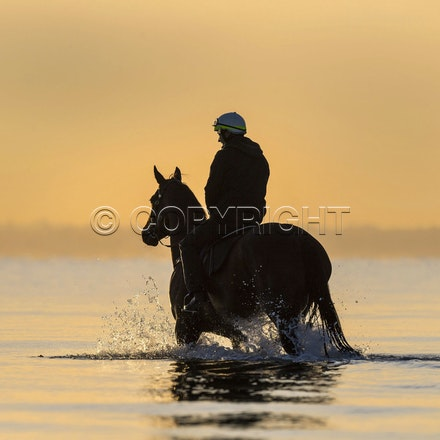 Winx-CaddenBen-10152017-6580 - Champion mare WINX (Street Cry - Vegas Showgirl) goes to Altona Beach on Sunday morning with her friend FOXPLAY.  Winx was...
