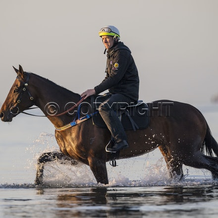 Winx-CaddenBen-10152017-6492 - Champion mare WINX (Street Cry - Vegas Showgirl) goes to Altona Beach on Sunday morning with her friend FOXPLAY.  Winx was...