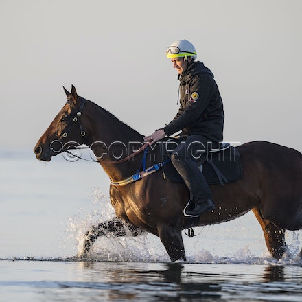 Winx-CaddenBen-10152017-6501 - Champion mare WINX (Street Cry - Vegas Showgirl) goes to Altona Beach on Sunday morning with her friend FOXPLAY.  Winx was...