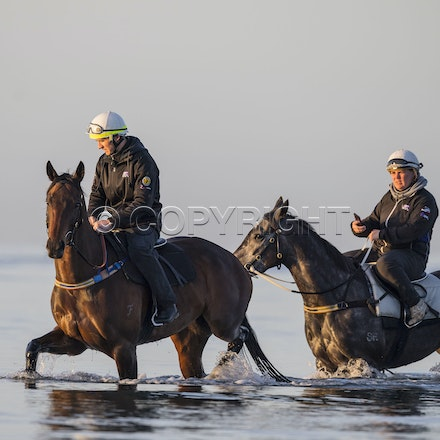 Winx-CaddenBen-10152017-6422 - Champion mare WINX (Street Cry - Vegas Showgirl) goes to Altona Beach on Sunday morning with her friend FOXPLAY.  Winx was...