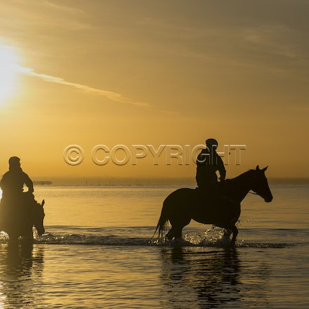 Winx-Foxplay-10152017-2434 - Champion mare WINX (bay mare, ridden by Ben Cadden) goes to Altona Beach on Sunday morning with her friend FOXPLAY (grey mare...