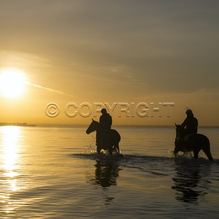 Winx-Foxplay-10152017-2405 - Champion mare WINX (bay mare, ridden by Ben Cadden) goes to Altona Beach on Sunday morning with her friend FOXPLAY (grey mare...