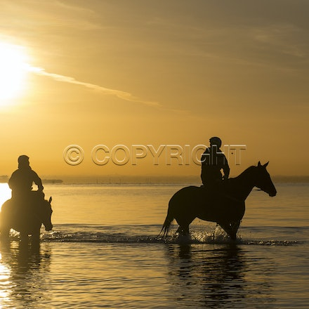 Winx-Foxplay-10152017-2433 - Champion mare WINX (bay mare, ridden by Ben Cadden) goes to Altona Beach on Sunday morning with her friend FOXPLAY (grey mare...