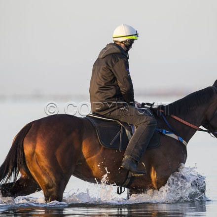 Winx-CaddenBen-10152017-6294 - Champion mare WINX (Street Cry - Vegas Showgirl) goes to Altona Beach on Sunday morning with her friend FOXPLAY.  Winx was...