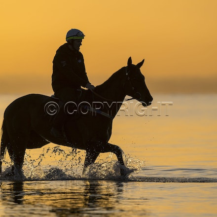 Winx-CaddenBen-10152017-5977 - Champion mare WINX (Street Cry - Vegas Showgirl) goes to Altona Beach on Sunday morning with her friend FOXPLAY.  Winx was...