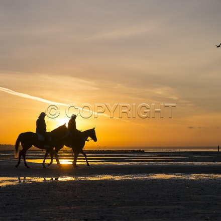 Winx-Foxplay-10152017-2258 - Champion mare WINX (bay mare, ridden by Ben Cadden) goes to Altona Beach on Sunday morning with her friend FOXPLAY (grey mare...
