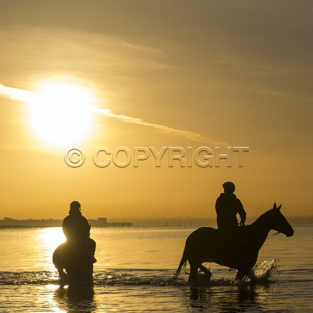 Winx-Foxplay-10152017-2430 - Champion mare WINX (bay mare, ridden by Ben Cadden) goes to Altona Beach on Sunday morning with her friend FOXPLAY (grey mare...