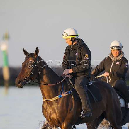 Winx-CaddenBen-10152017-6203 - Champion mare WINX (Street Cry - Vegas Showgirl) goes to Altona Beach on Sunday morning with her friend FOXPLAY.  Winx was...