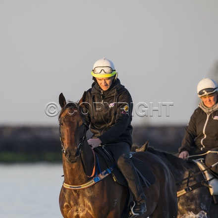 Winx-CaddenBen-10152017-6190 - Champion mare WINX (Street Cry - Vegas Showgirl) goes to Altona Beach on Sunday morning with her friend FOXPLAY.  Winx was...