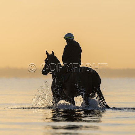 Winx-CaddenBen-10152017-6579 - Champion mare WINX (Street Cry - Vegas Showgirl) goes to Altona Beach on Sunday morning with her friend FOXPLAY.  Winx was...
