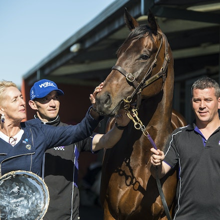 Winx-PressConference-10292017-9655 - Champion mare WINX looks at her 3 Cox Plate trophies, from 2015, 2016 and 2017, with  her owners Debbie and Paul Kepitis,...