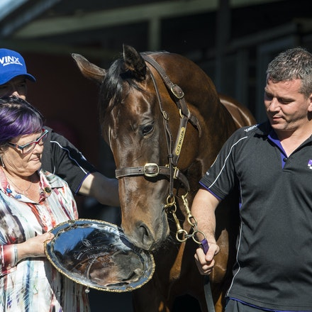 Winx-PressConference-10292017-9707 - Champion mare WINX looks at her 3 Cox Plate trophies, from 2015, 2016 and 2017, with  her owners Debbie and Paul Kepitis,...