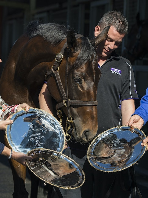 Winx-PressConference-10292017-9758_1 - Champion mare WINX looks at her 3 Cox Plate trophies, from 2015, 2016 and 2017, with  her owners Debbie and Paul...