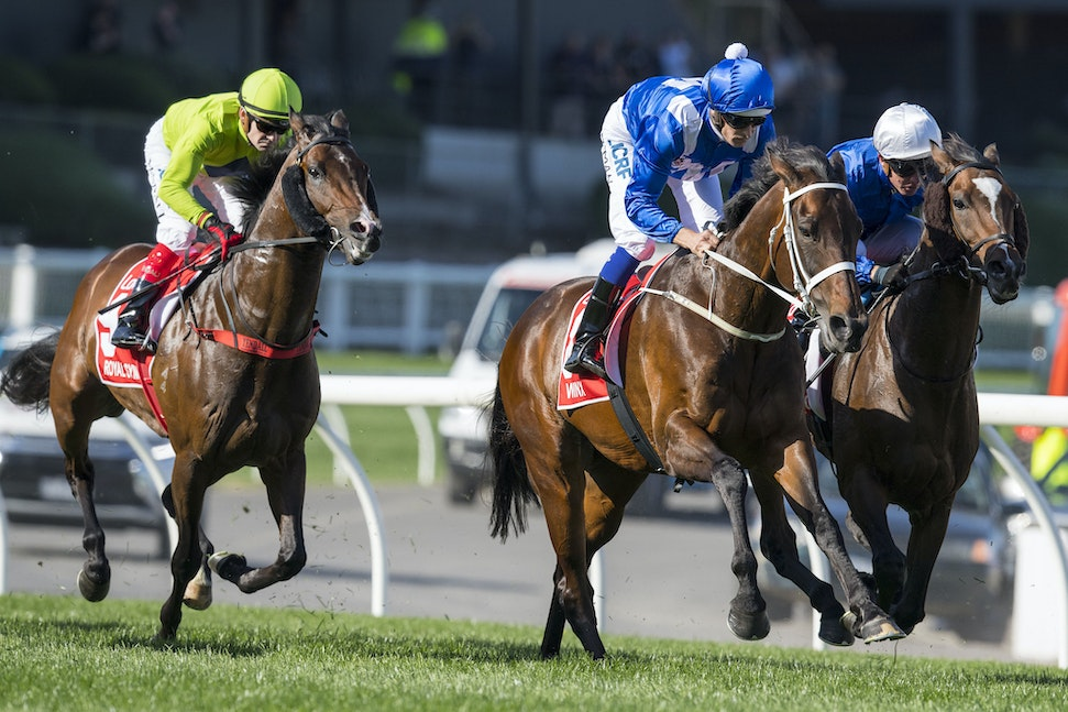 Winx-BowmanHugh-10282017-7042 - Champion mare WINX equals Kingston Town's record of 3 Cox Plate.  Ridden by Hugh Bowman.  Photo - Bronwen Healy.  The Image...