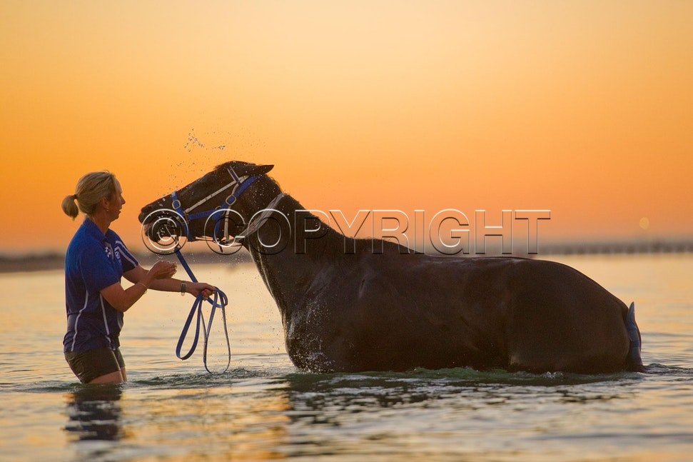 BlackCaviar-01242012-DSC_1805 - Black Caviar visits the beach at dawn on 24 January 2012, as part of her leadup to the Australian Stakes on 27 January....