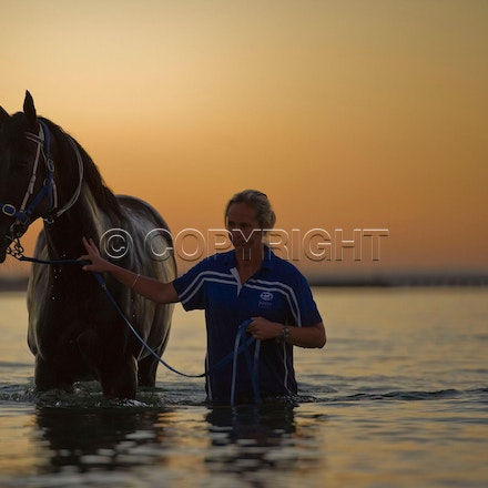 BlackCaviar-01242012-DSC_1819 - Black Caviar visits the beach at dawn on 24 January 2012, as part of her leadup to the Australian Stakes on 27 January....