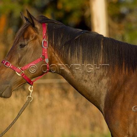 BlackCaviar-12202012-DSC_6389