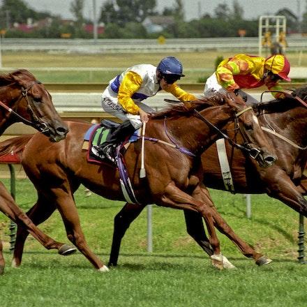 Redoute's Choice (racetrack) - REDOUTE'S CHOICE (Danehill x Shantha's Choice)