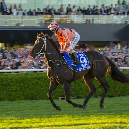 BlackCaviar-NolenLuke-04132013-DSC_4678 - Black Caviar (Bel Esprit - Helsinge) wins the G1 TJ Smith Stakes at Royal Randwick on 13 April 2013.  Trained...