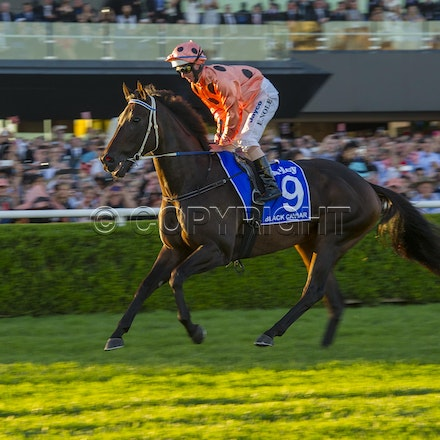 BlackCaviar-NolenLuke-04132013-DSC_4679 - Black Caviar (Bel Esprit - Helsinge) wins the G1 TJ Smith Stakes at Royal Randwick on 13 April 2013.  Trained...