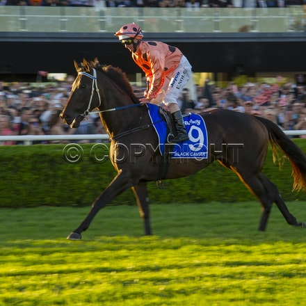 BlackCaviar-NolenLuke-04132013-DSC_4680 - Black Caviar (Bel Esprit - Helsinge) wins the G1 TJ Smith Stakes at Royal Randwick on 13 April 2013.  Trained...