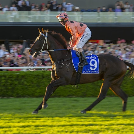 BlackCaviar-NolenLuke-04132013-DSC_4683 - Black Caviar (Bel Esprit - Helsinge) wins the G1 TJ Smith Stakes at Royal Randwick on 13 April 2013.  Trained...