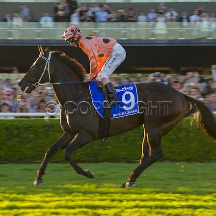 BlackCaviar-NolenLuke-04132013-DSC_4686 - Black Caviar (Bel Esprit - Helsinge) wins the G1 TJ Smith Stakes at Royal Randwick on 13 April 2013.  Trained...