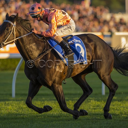 BlackCaviar-NolenLuke-04132013-DSC_6803 - Black Caviar (Bel Esprit - Helsinge) wins the G1 TJ Smith Stakes at Royal Randwick on 13 April 2013.  Trained...