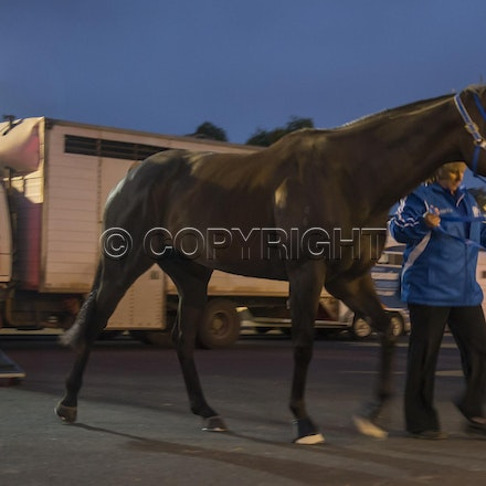 BlackCaviar-03222013-DSC_0797 - Black Caviar (Bel Esprit - Helsinge) arrives on course before the William Reid Stakes (G1) on Friday 22 March 2013. Photo...