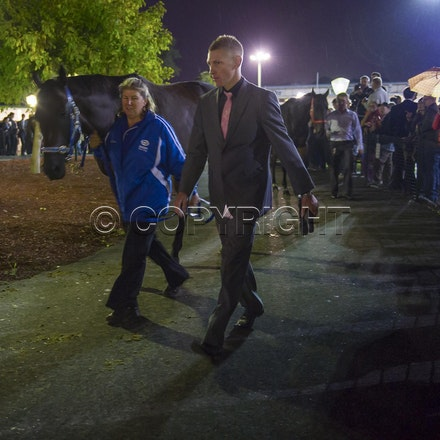 BlackCaviar-03222013-DSC_0922_1 - Black Caviar (Bel Esprit - Helsinge) arrives on course before the William Reid Stakes (G1) on Friday 22 March 2013. Photo...