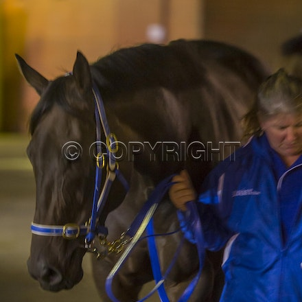 BlackCaviar-03222013-DSC_1071 - Black Caviar (Bel Esprit - Helsinge) arrives on course before the William Reid Stakes (G1) on Friday 22 March 2013. Photo...