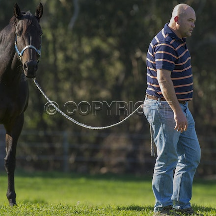 BlackCaviar-MoodyPeter-05102013-DSC_1015 - Black Caviar (Bel Esprit - Helsinge) pictured on Friday 10 May 2013 with trainer Peter Moody, at his Belgrave...