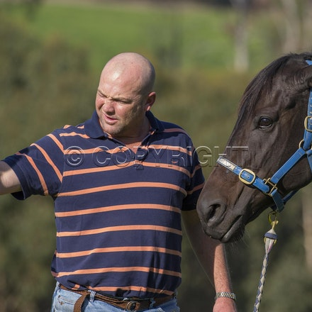 BlackCaviar-MoodyPeter-05102013-DSC_1102 - Black Caviar (Bel Esprit - Helsinge) pictured on Friday 10 May 2013 with trainer Peter Moody, at his Belgrave...