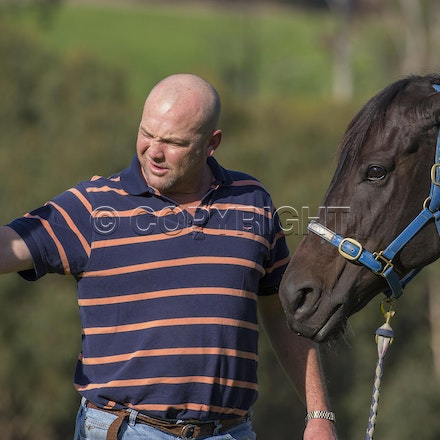 BlackCaviar-MoodyPeter-05102013-DSC_1103 - Black Caviar (Bel Esprit - Helsinge) pictured on Friday 10 May 2013 with trainer Peter Moody, at his Belgrave...