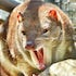 endangered quoll Cape Otway