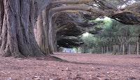 Cypress avenue Lorne depth of field