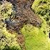 Mini moss forest