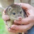 Quoll (2 of 92)