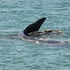 Whales between George River and Sheoak River 8 - Leon Walker Photography