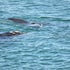 Whales between George River and Sheoak River 11 - Leon Walker Photography