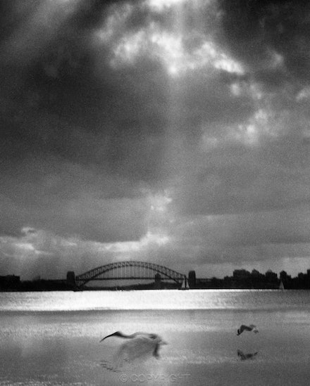 Ibis and The Bridge and sunset from Watsons Bay. - 35mm photograph of Ibis flying backwards. Each archival photograph is stamped and signed by Robert and...