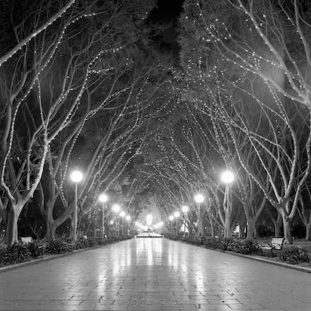 Hyde Park glowing lights and walkway. - Photographed after dark,in summer with Hasselblad on tripod.  Each archival photograph is stamped and signed by...